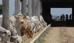 Casos atípicos de vaca loca «no ponen en riesgo» la venta de ganado en Brasil